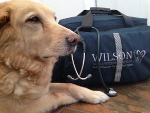 Wilson Mobile Vet