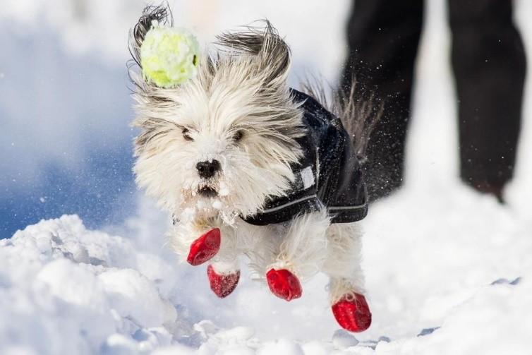"""Képtalálat a következőre: """"extreme cold pets wear"""""""